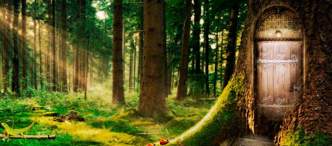 Bosque-de-Fantasía