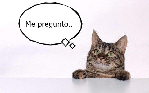 curious-cat-258230.jpg